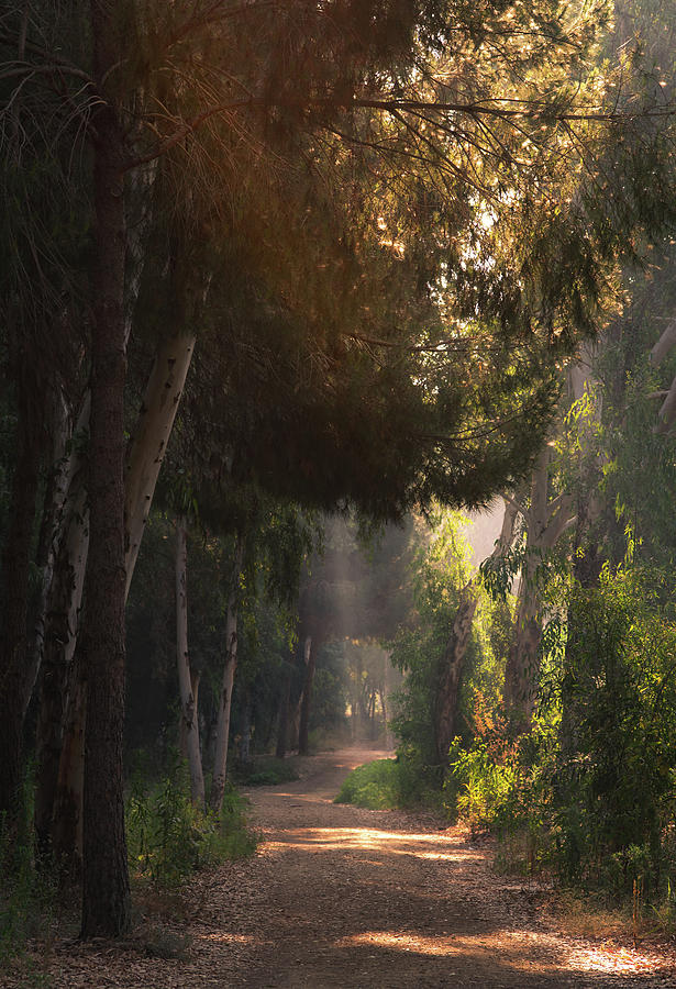 Morning Sunbeams Sunrays Shining Through Trees In Autumn Morning Bright Light Photograph By Michalakis Ppalis