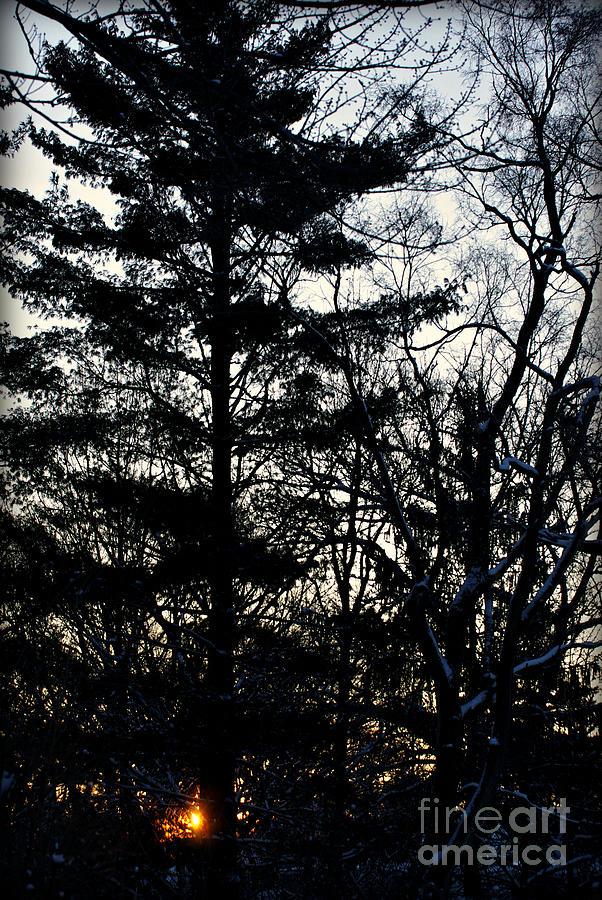 Morning Sunrise Pine Tree Silhouette by Frank J Casella