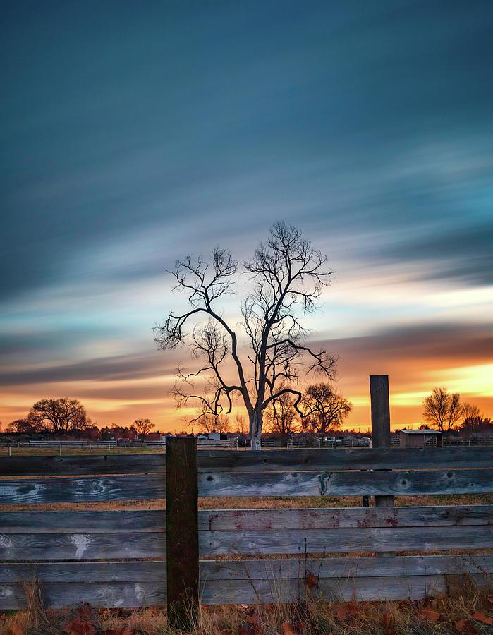 Morning Tree Long Exposure by Harold Carlson