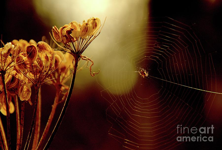 Flowers Photograph - Morning Wait by Roland Stanke