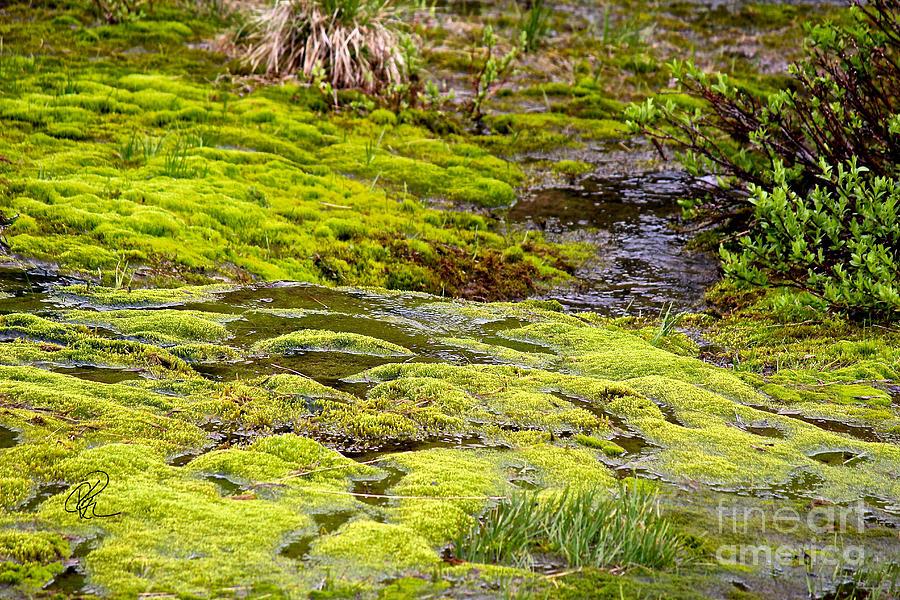 Mossy Bottom by Ann E Robson