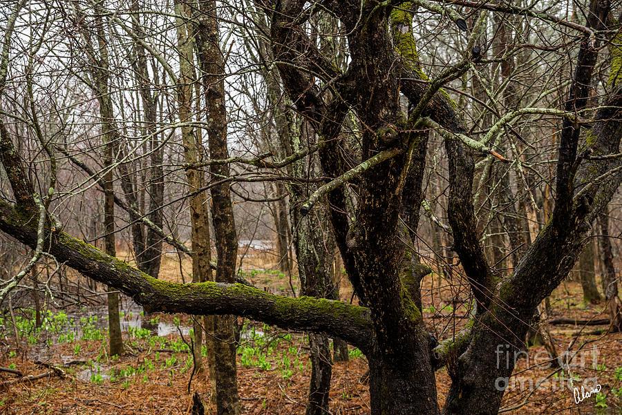 Mossy Branch Photograph