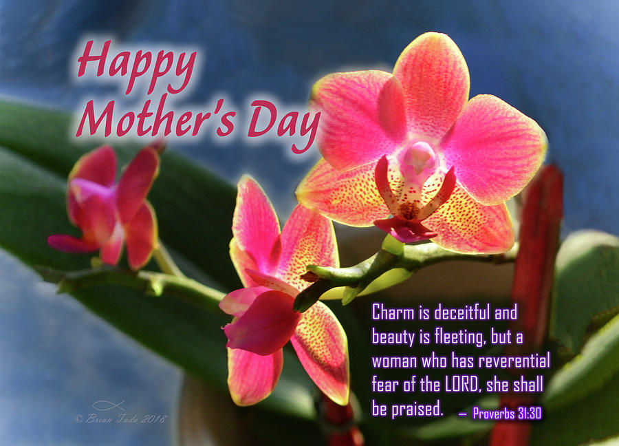 Mothers Day Orchids Photograph