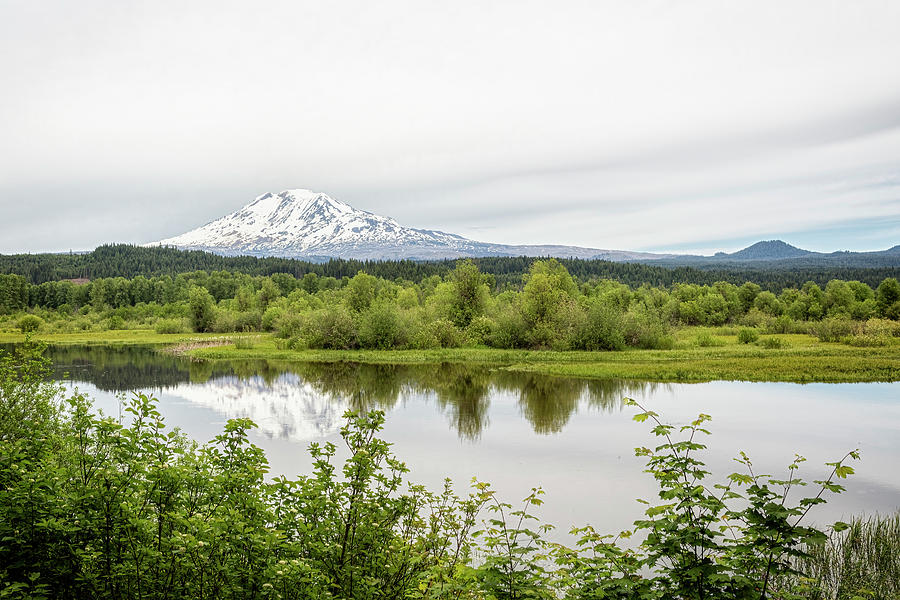 Mount Adams From Trout Lake Photograph