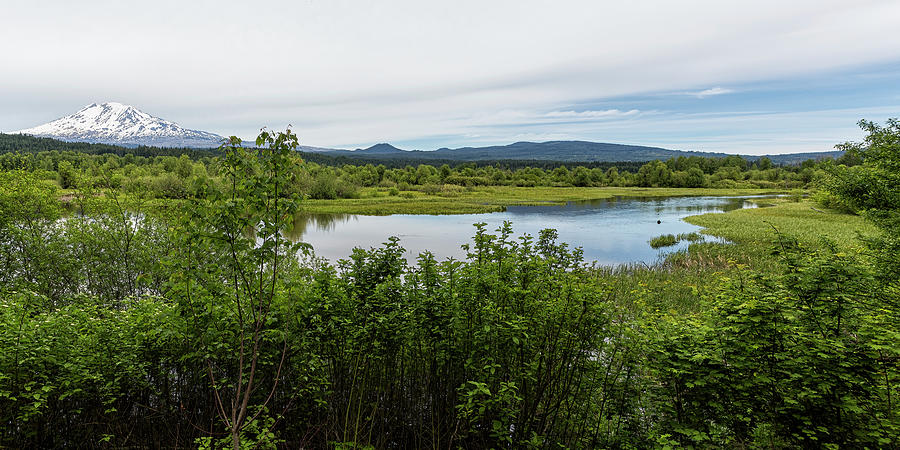 Mount Adams From Trout Lake Panorama Photograph