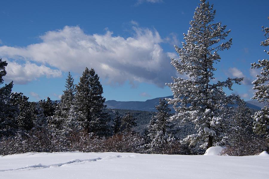 Mount Falcon Blue And White Winter Landscape Photograph