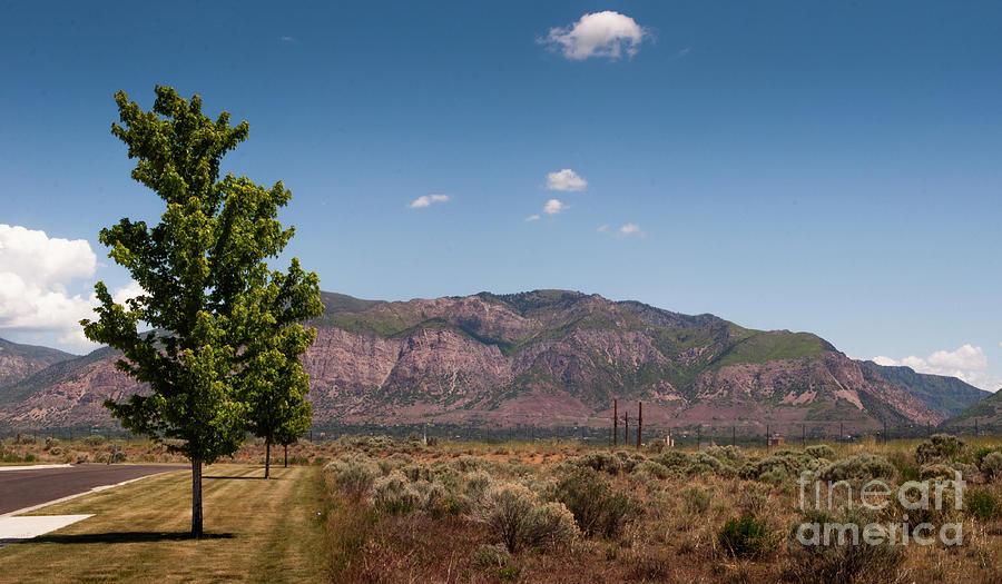 Ogden Utah Photograph - Mount Ogden Utah and De Moisy Peak by Dejan Jovanovic