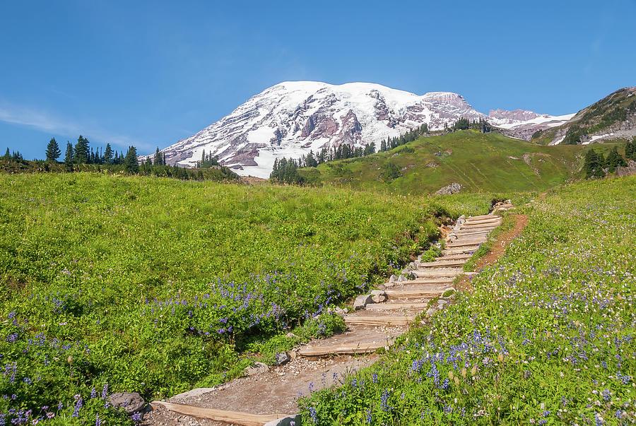 Mount Rainier And Trail Photograph
