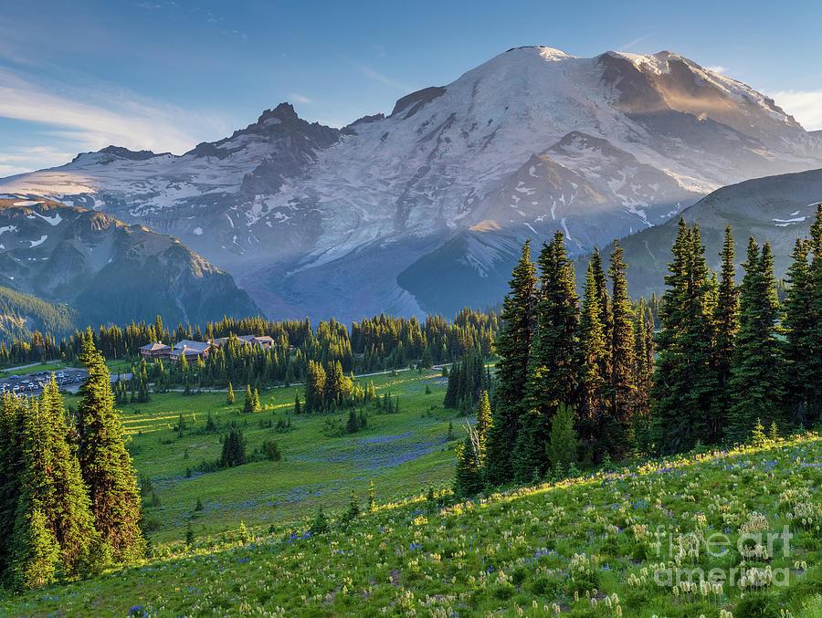 Mount Rainier Dusk Meadows Photograph