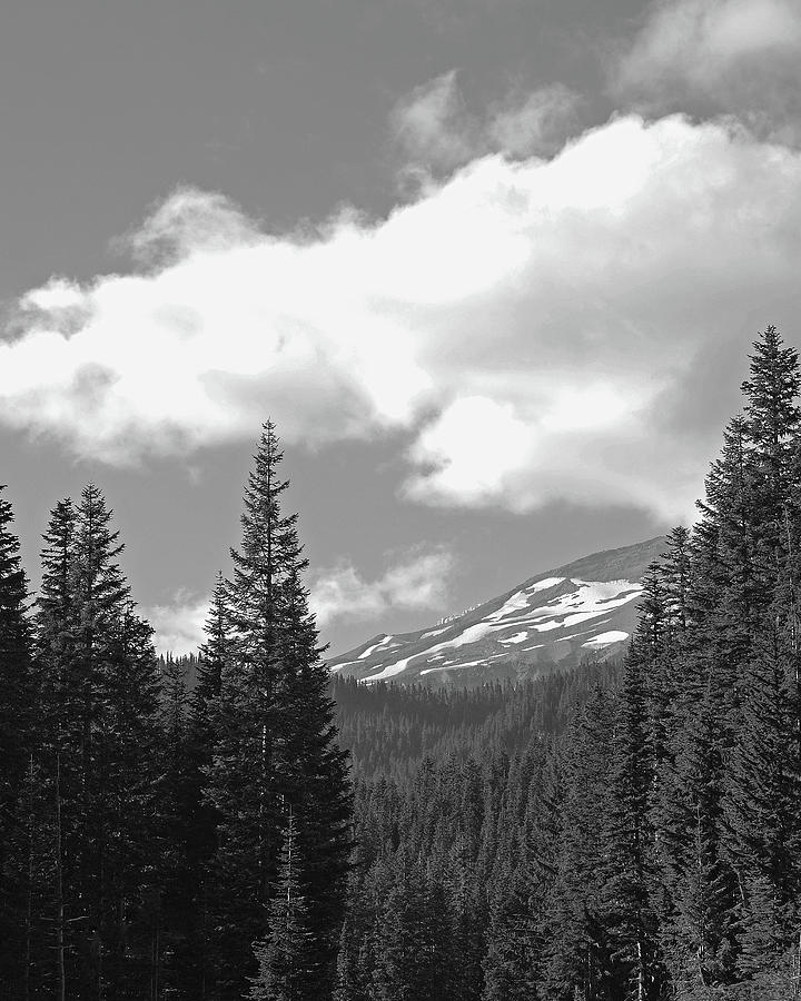 Mount Rainier National Park Bw Photograph