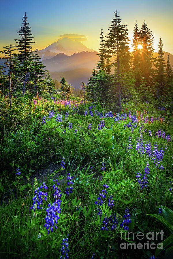 Mount Rainier Sunburst Photograph
