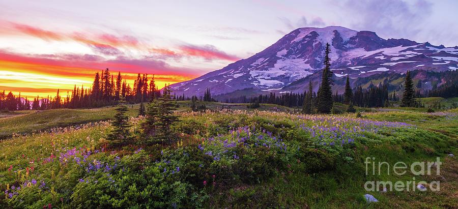Mount Rainier Wildflower Meadows Sunset Panorama Photograph