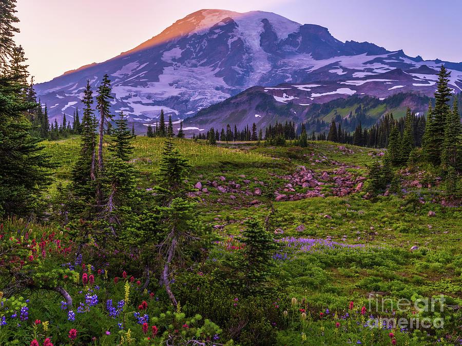 Mount Rainier Wildflowers Landscape Photograph