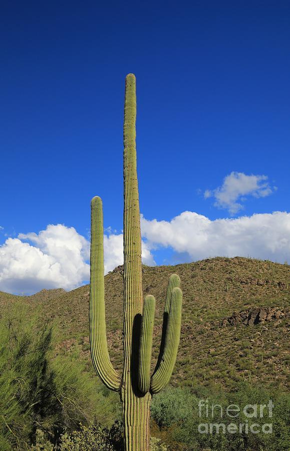 Mountain In The Desert Against Sky Photograph