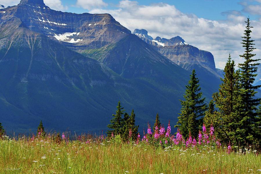 Mountain Meadows Photograph By Linda Sannuti