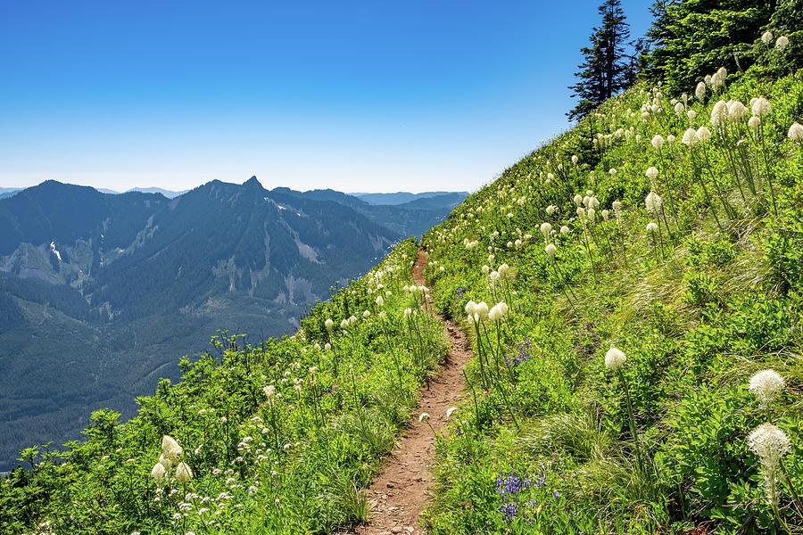 Mountain Trail Photograph