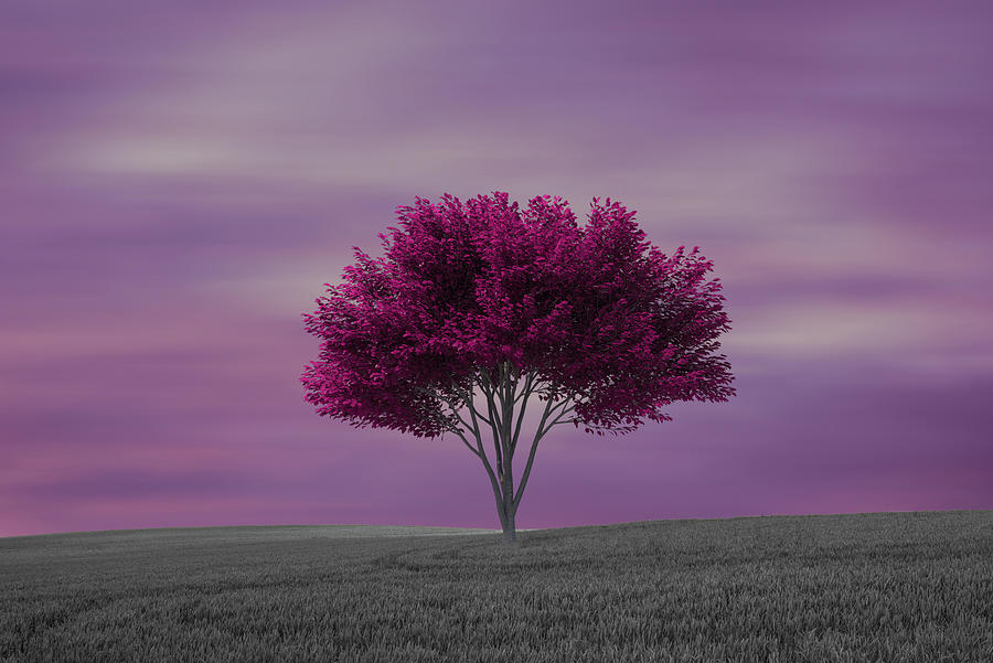 Mounting a lonely tree in the field by Vicen Photography