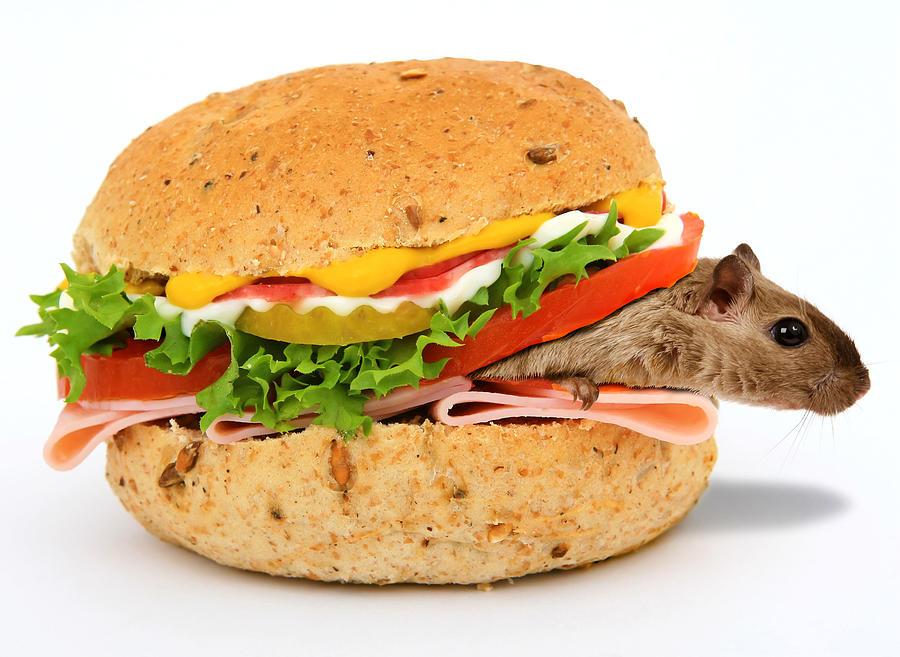 Mouse And Ham Sandwich Surrealism Digital Art