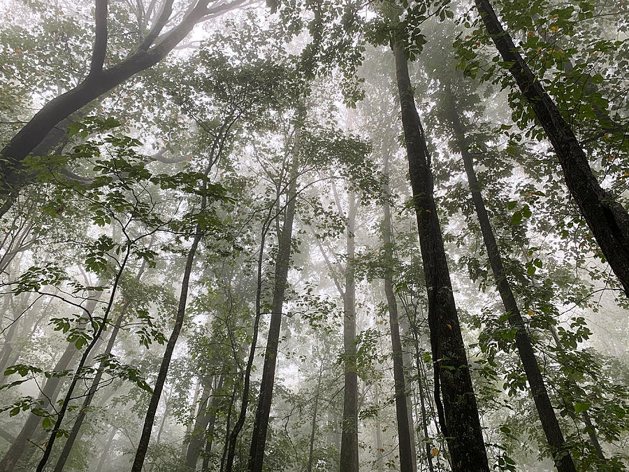 Mt. Yonah Mist by Keith Smith