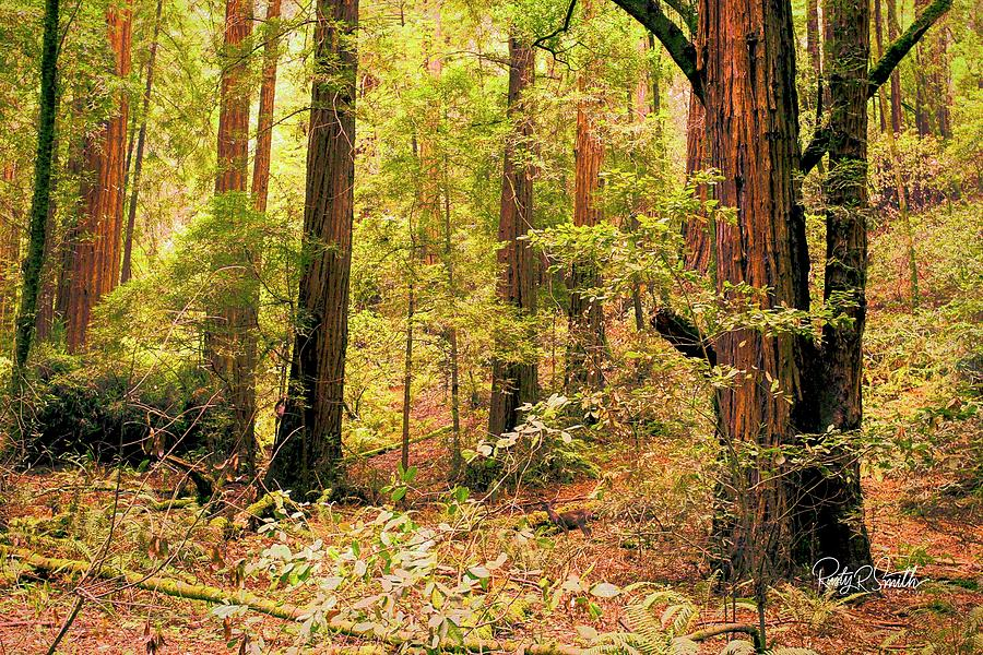 Muir Woods National Monument north of San Francisco california.  by Rusty R Smith