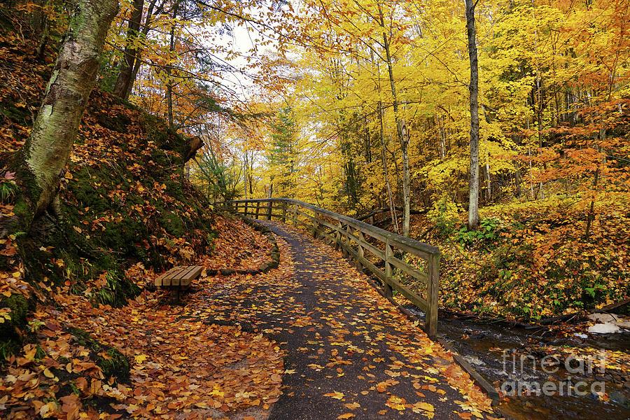 Munising Falls Trail In Autumn Photograph