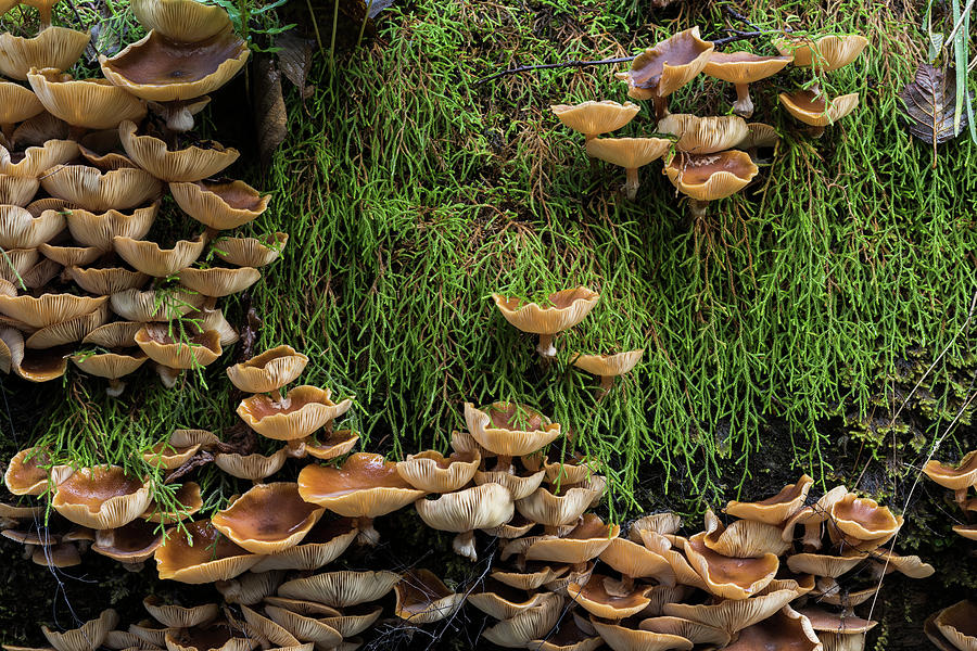 Mushrooms and Club Moss by Robert Potts