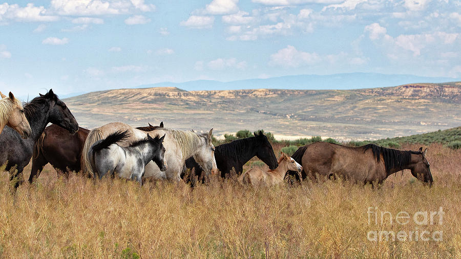 Mustang Promenade by Jim Garrison