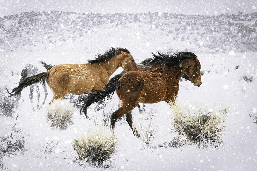 Mustangs In Winter Photograph