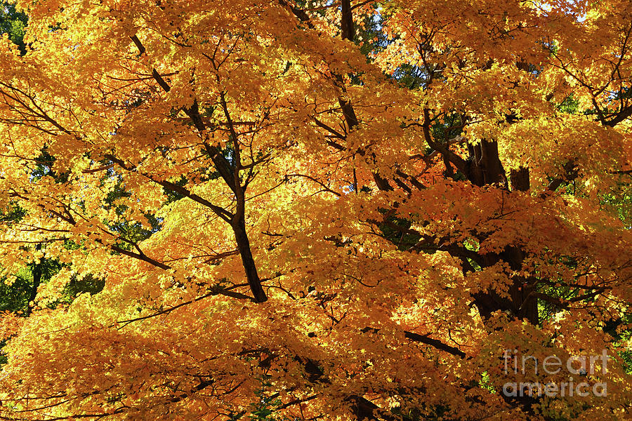 My Autumn Sunshine Photograph