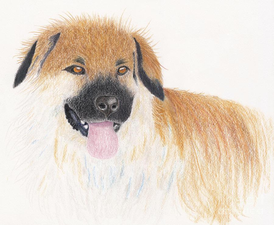 Dog Portrait Drawing - My Best Girl Teddi Bear by Conni Schaftenaar