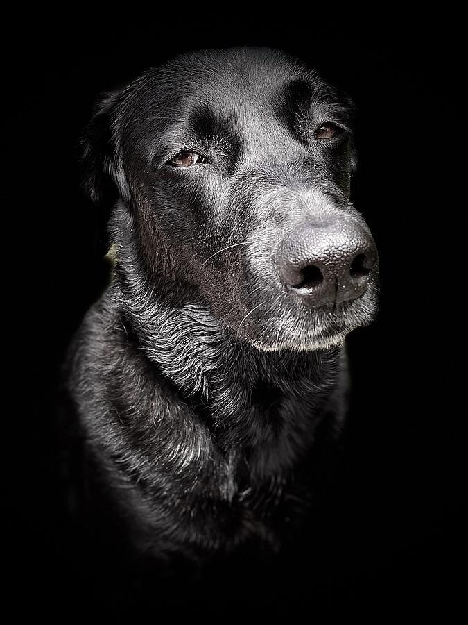 My Dog Darby Photograph
