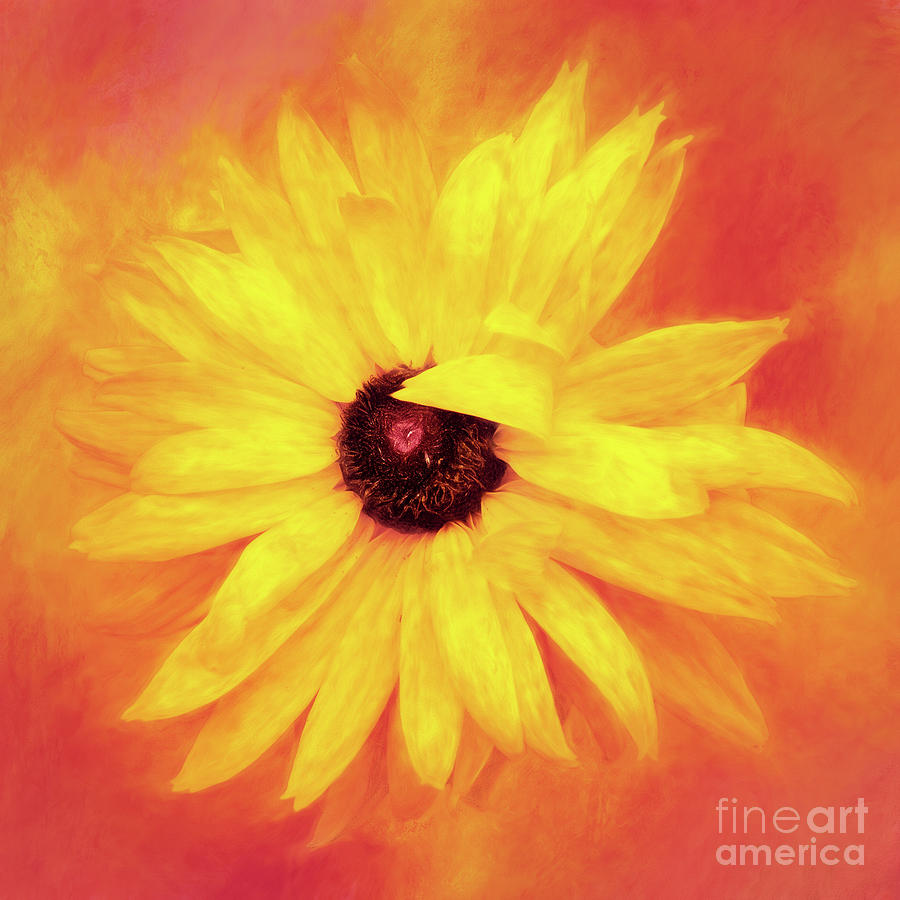 My Petals Are Always in My Face by Anita Pollak
