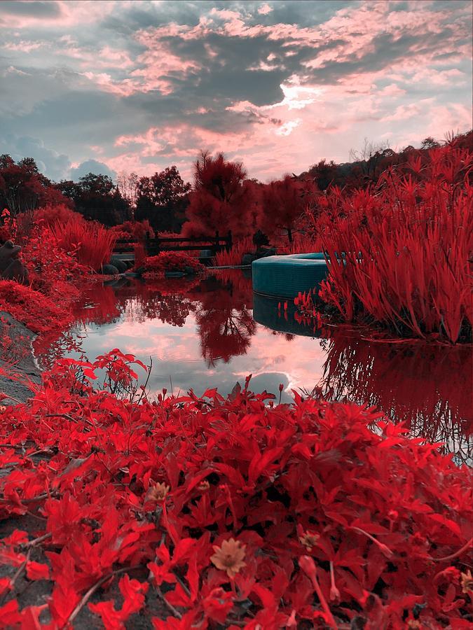 My red pond. by Silvia Marcoschamer