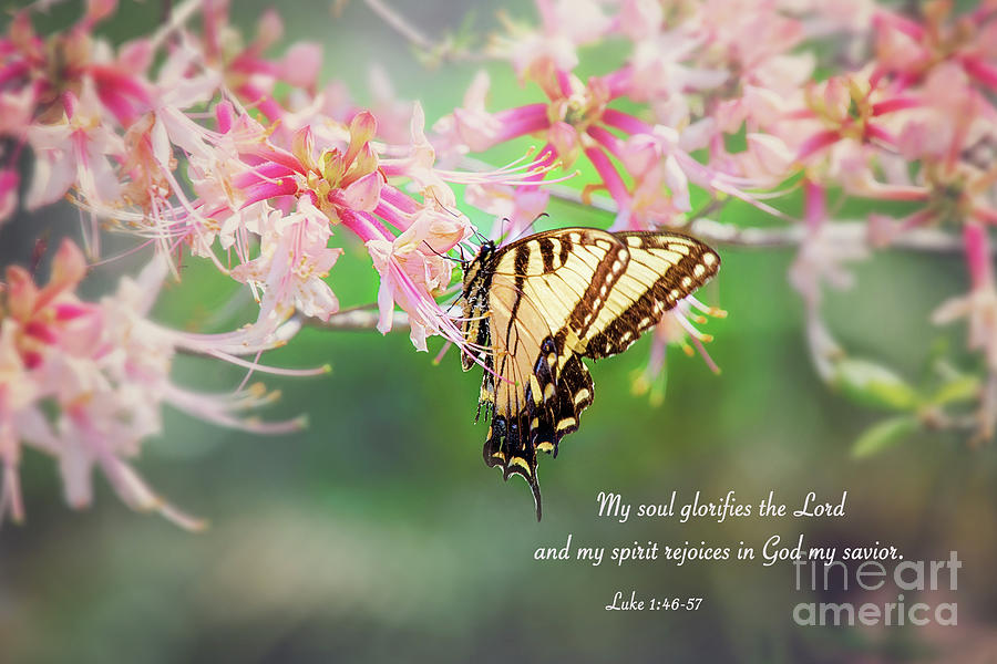 My Soul Glorifies The Lord by Sharon McConnell