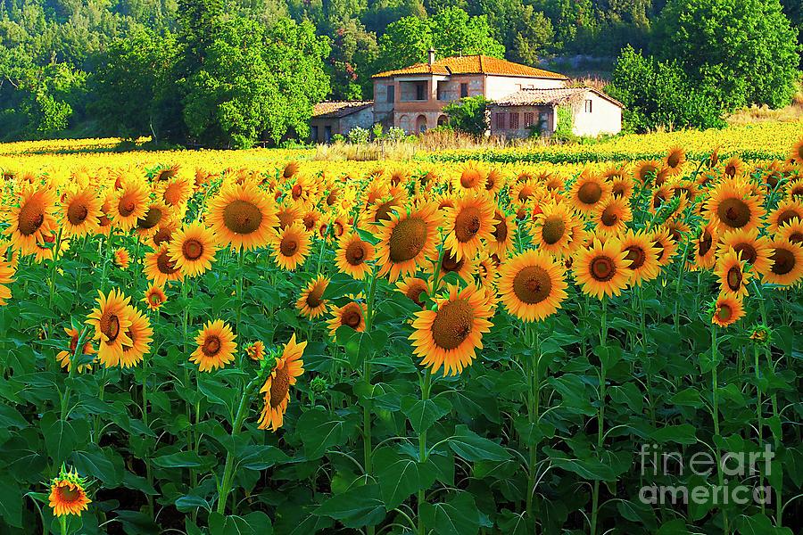 My Tuscany # 11. Photograph