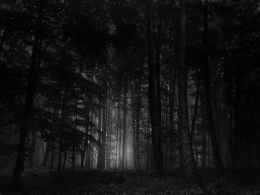 Mysterious Light Enimating From The Dark Woods Photograph