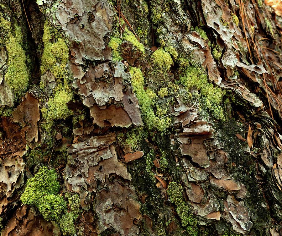 Mysterious Tree Bark by Margaret Zabor