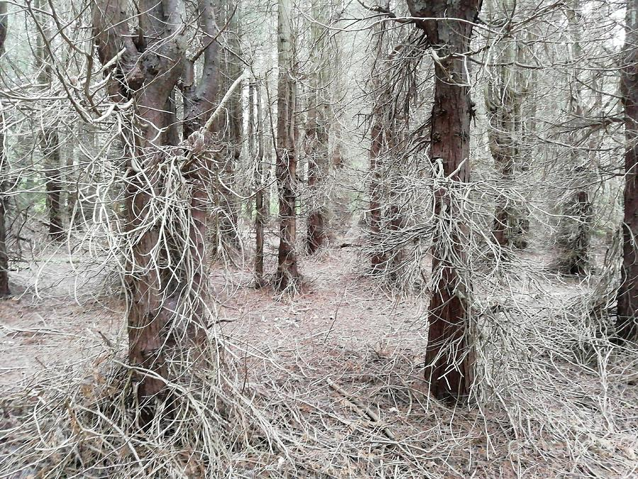 Mysterious Woodland Photograph