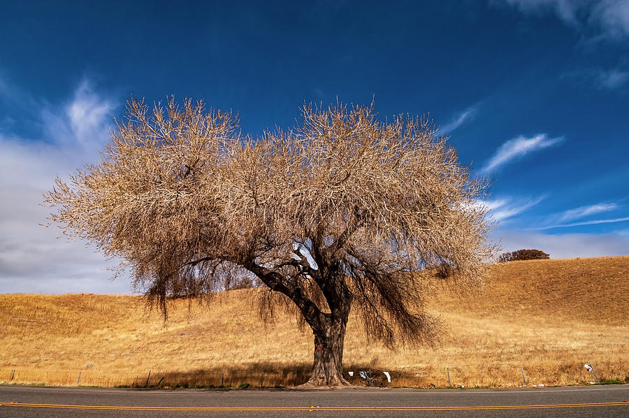 Naked Tree in Zion National Park, Utah | Naked Tree in