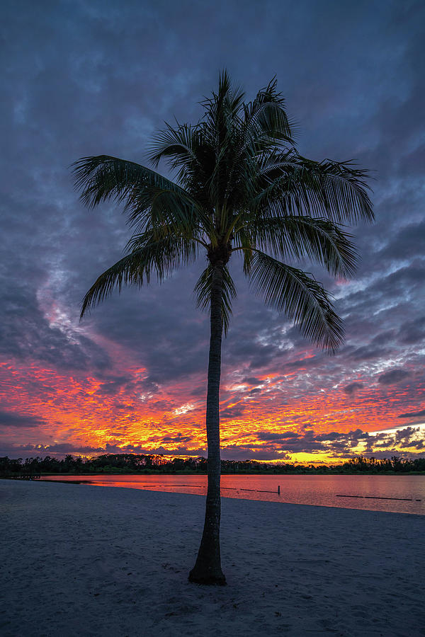 Naples Fire Sky Palm 2021 Photograph by Joey Waves