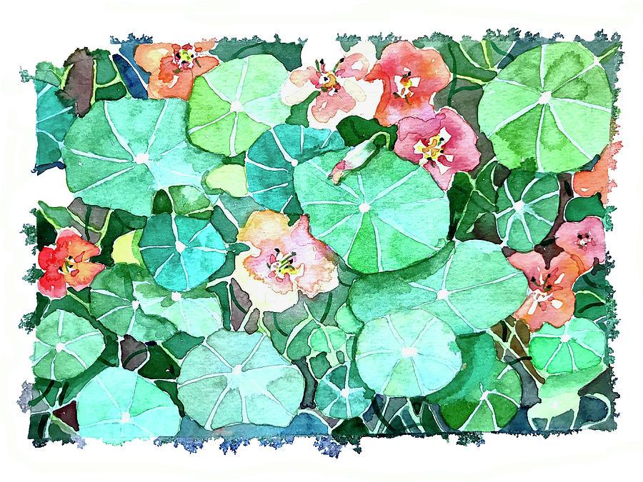 Nasturtium Flowers. Painting