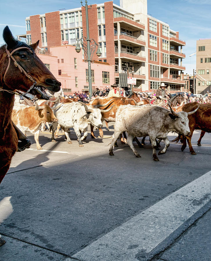 National Western Stock Show Parade Longhorns by James BO Insogna