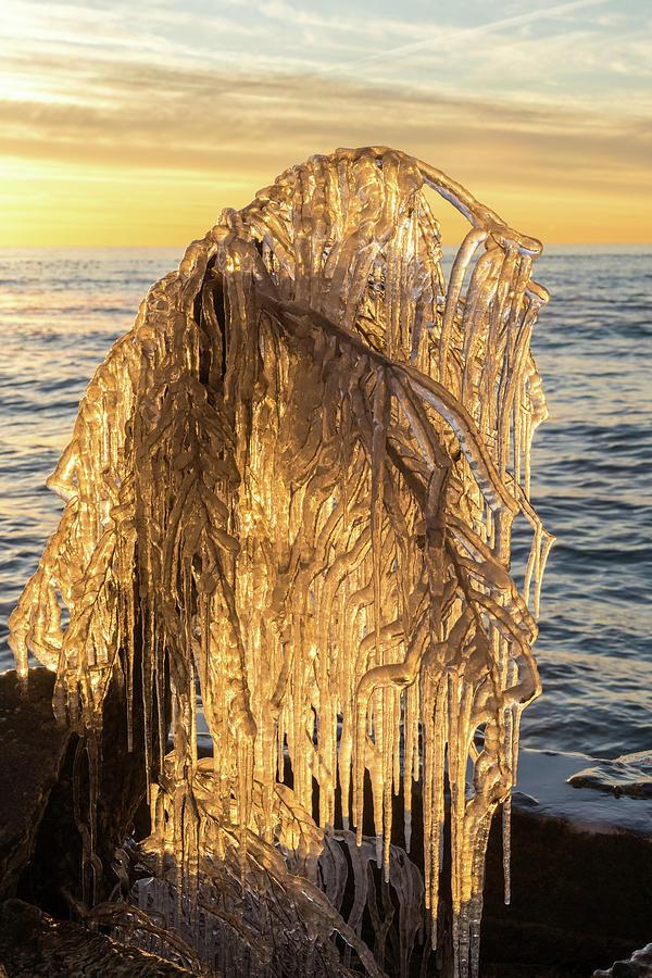Natural Ice Sculpture - Frozen Tree Statue on the Lake Shore by Georgia Mizuleva