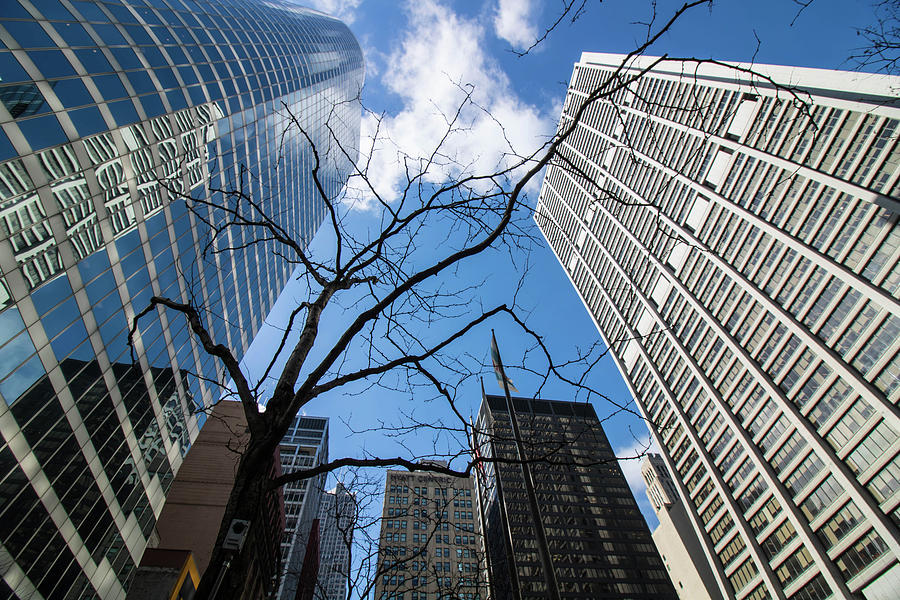Nature and Skyscraper by Britten Adams