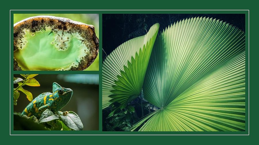 Chameleon Mixed Media - Nature As Art by Nancy Ayanna Wyatt