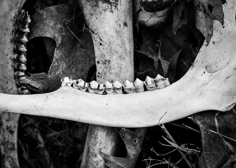 Nature Photography - Bones Photograph