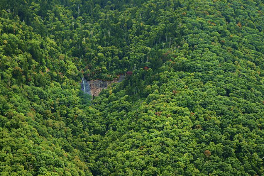 Natures Irrigation Photograph
