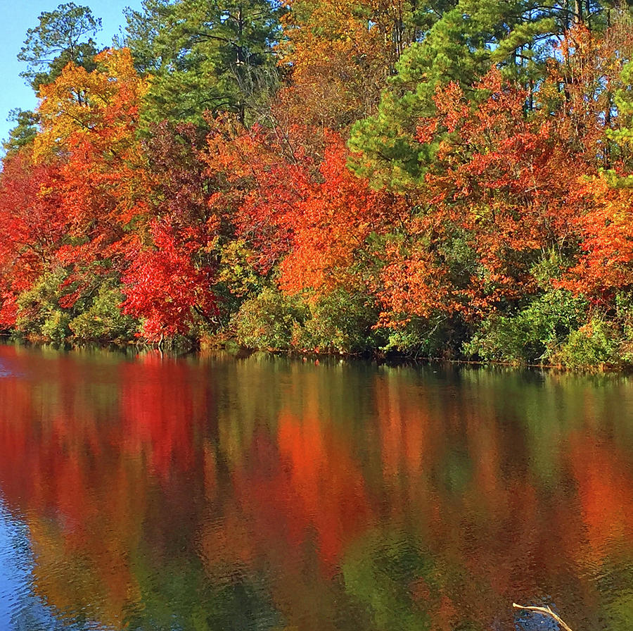 Autumn Photograph - Columbia South Carolina by Matthew Seufer