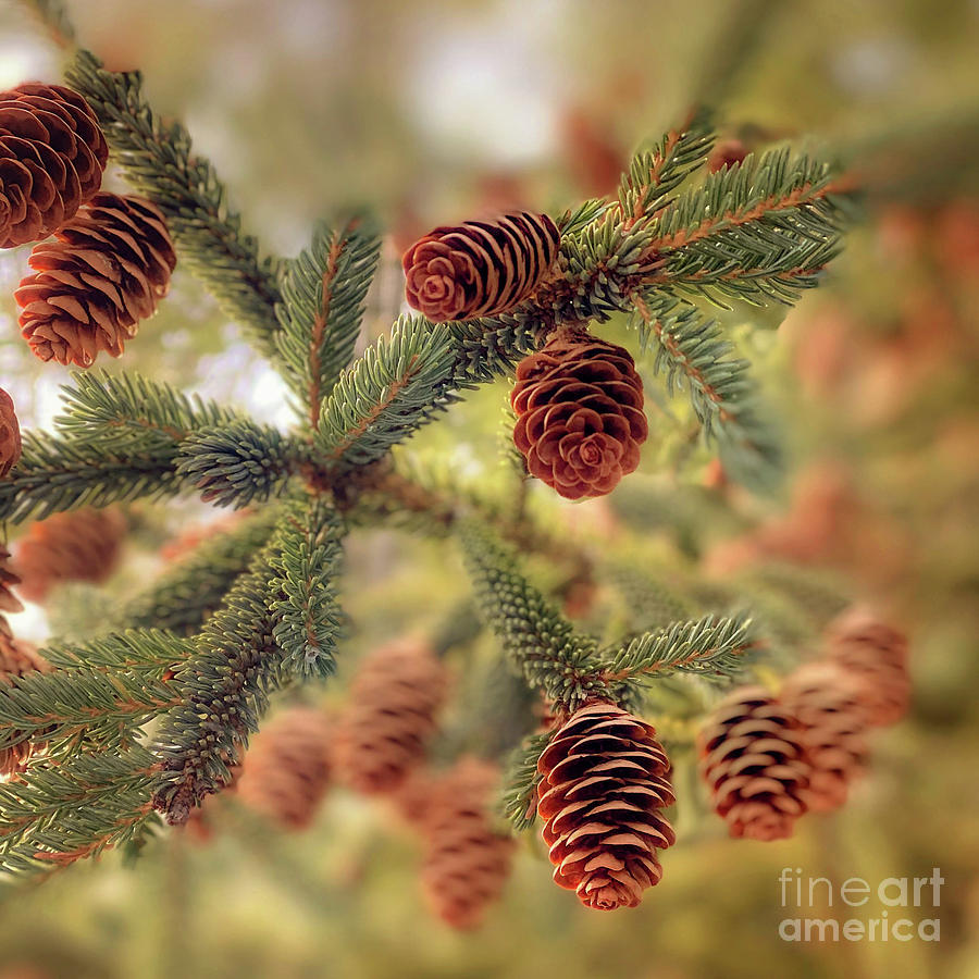 Nature's Ornaments by Susan Garver