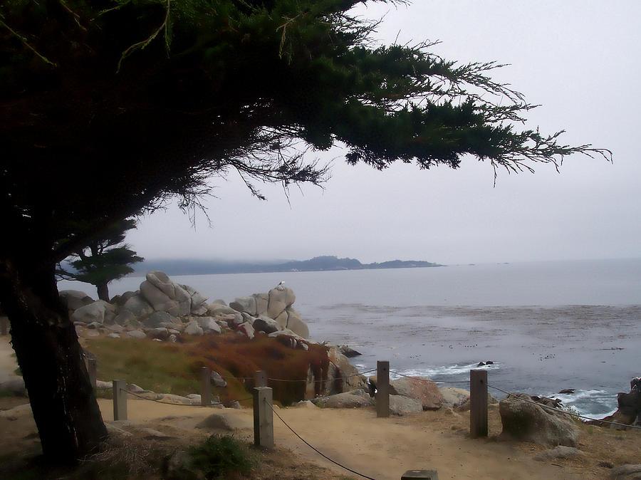 Beach Photograph - Near Carmel by Pharris Art